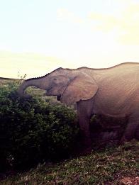 Addo Elephant Park full of happy elephants