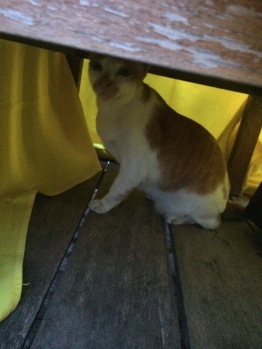 When a cat chills under your table for food