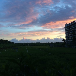 Sunset over a rice paddy field