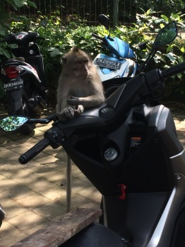 A monkey chillin gon my scooter. It was awkward to wait till he got off
