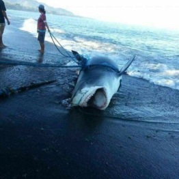 Not my picture, but this washed up on one of the Balinese beaches