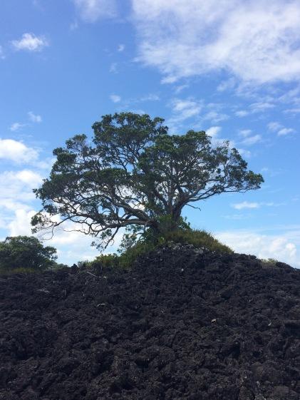 Rangitoto Scenic Reserve